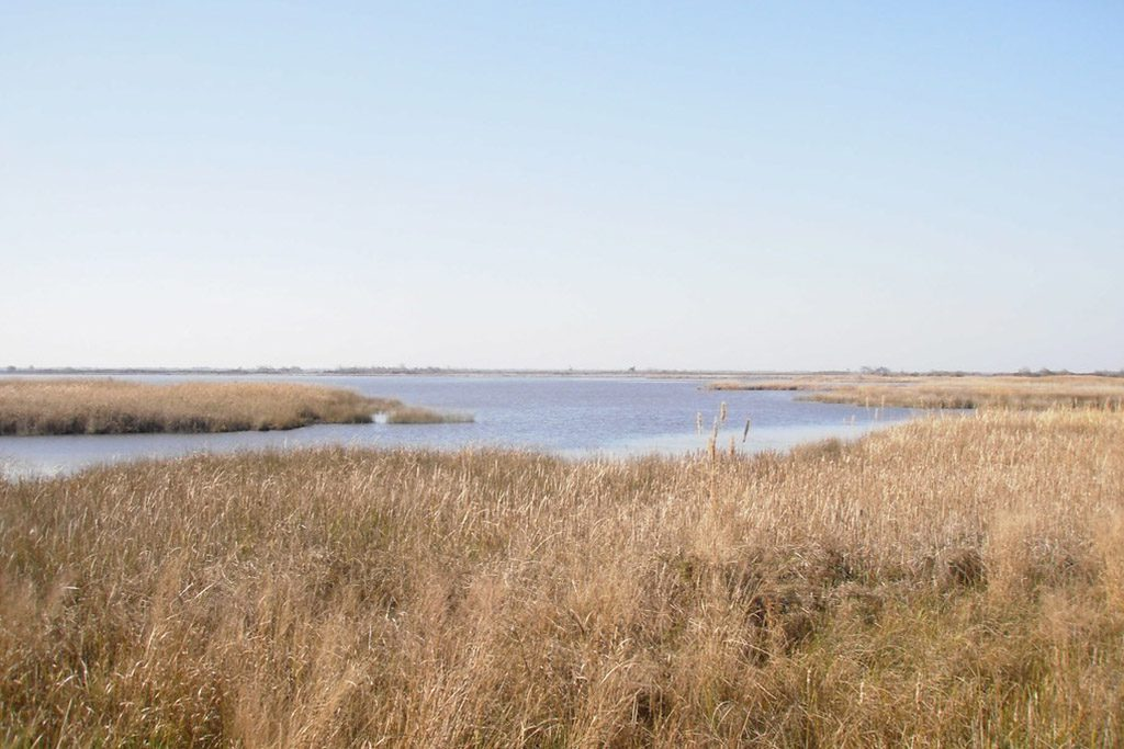 Back Bay National Wildlife Refuge marsh