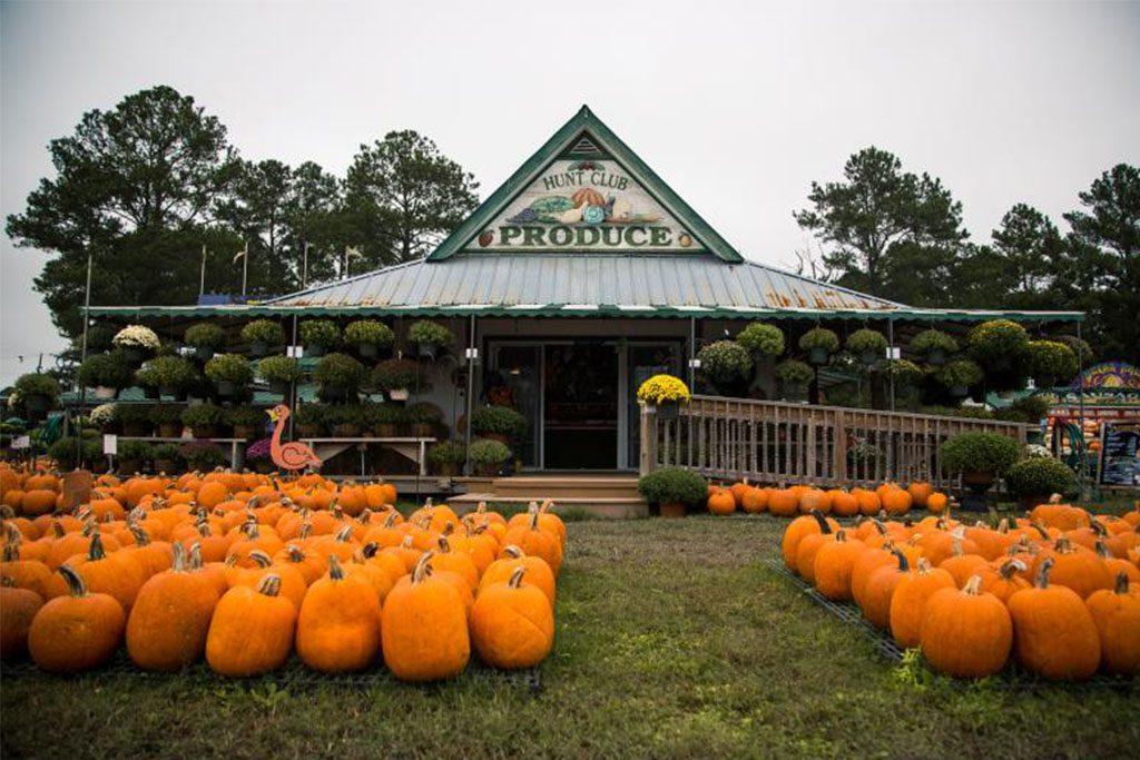 Virginia Beach pumpkin farm